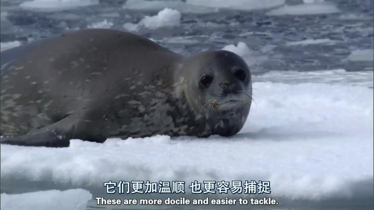BBC纪录片《冰冻地球》高清全集